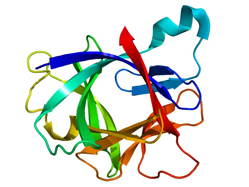 Recombinant Human Interleukin -1 beta