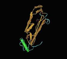 Recombinant Human Angiostatin